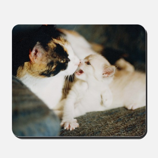 CALICO CAT AND WHITE KITTY Mousepad