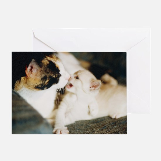 CALICO CAT AND WHITE KITTY Greeting Card
