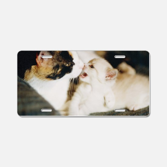 CALICO CAT AND WHITE KITTY Aluminum License Plate
