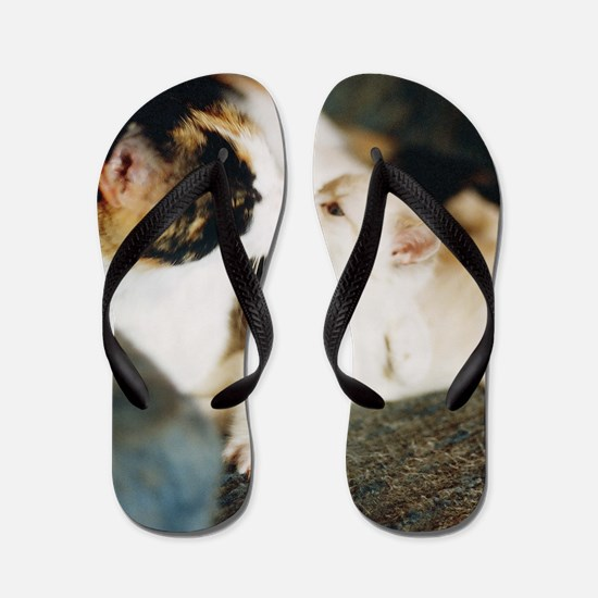 CALICO CAT AND WHITE KITTY Flip Flops