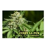 Cindy La Pew (with name) Postcards (Package of 8)