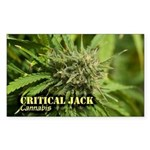 Critical Jack (with name) Sticker (Rectangle)