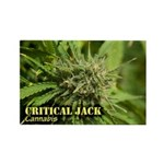 Critical Jack (with name) Rectangle Magnet