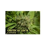 Critical Jack (with na Rectangle Magnet (100 pack)