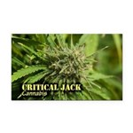 Critical Jack (with name) Rectangle Car Magnet