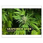 Grapefruit Kush (with name) Small Poster