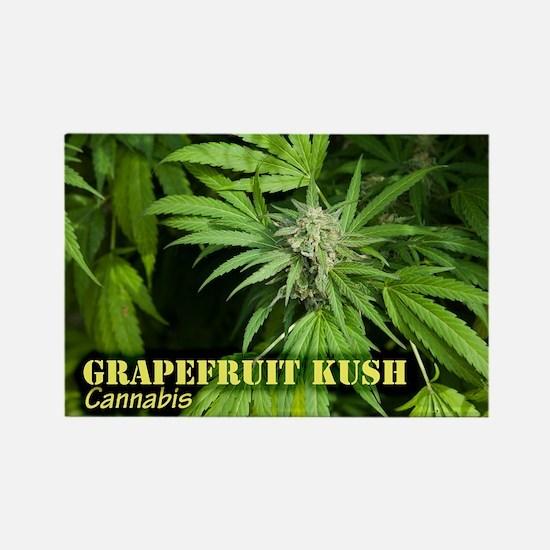 Grapefruit Kush (with name) Rectangle Magnet