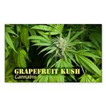 Grapefruit Kush (with na Sticker (Rectangle 10 pk)