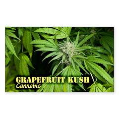 Grapefruit Kush (with na Sticker (Rectangle 10 pk)