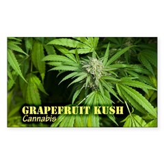 Grapefruit Kush (with na Sticker (Rectangle 50 pk)