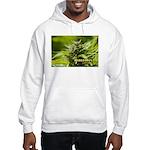 Harlequin (with name) Hooded Sweatshirt