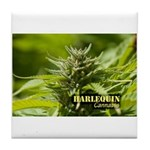 Harlequin (with name) Tile Coaster