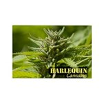 Harlequin (with name) Rectangle Magnet (10 pack)