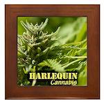 Harlequin (with name) Framed Tile