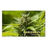 Harlequin (with name) Sticker (Rectangle 10 pk)