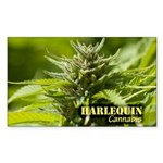 Harlequin (with name) Sticker (Rectangle 50 pk)