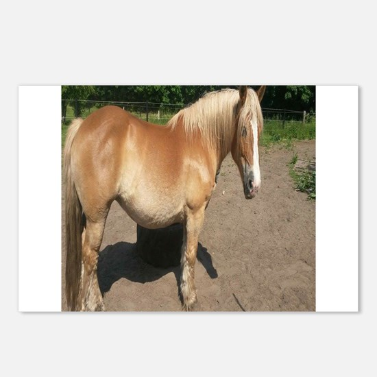 Unique Horse themed Postcards (Package of 8)