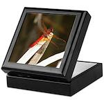 Red Dragonfly Keepsake Box