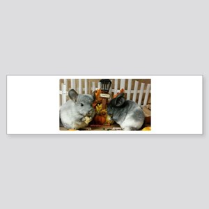 White Ebonies Chinchillas Bumper Sticker