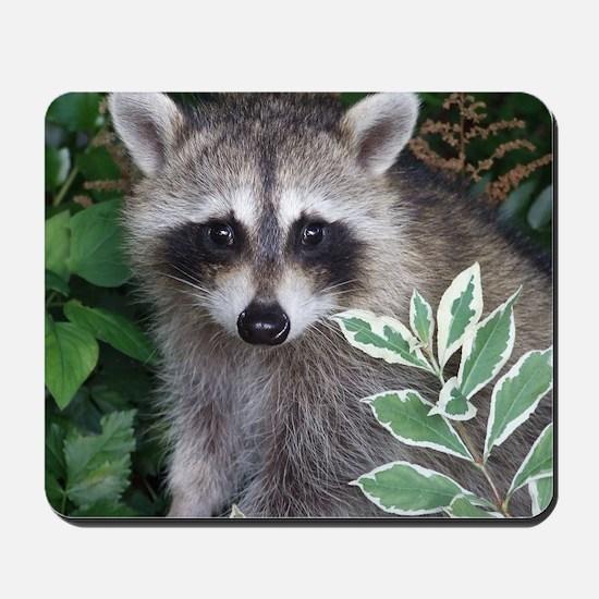 Baby Raccoon Photo Mousepad