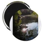 Otter Paradise Magnet
