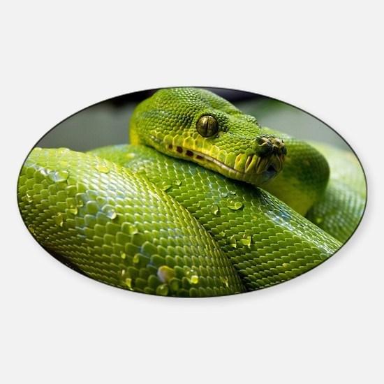 Cute Snake eyes Sticker (Oval)