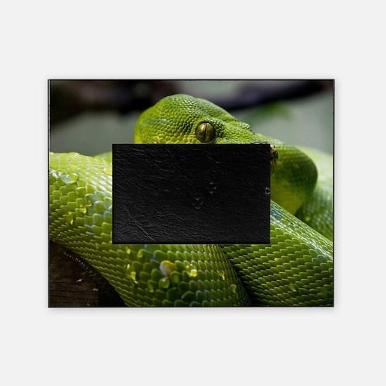 Funny Snake eyes Picture Frame