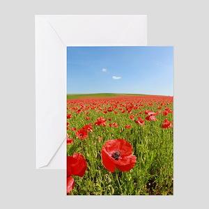 Poppy Field PRO PHOTO Greeting Cards