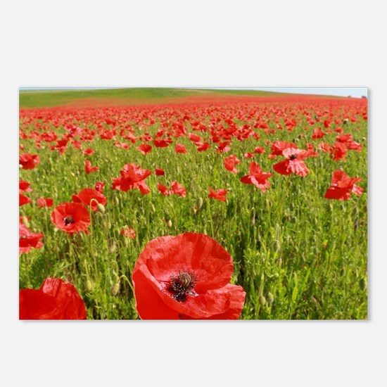 Poppy Field PRO PHOTO Postcards (Package of 8)