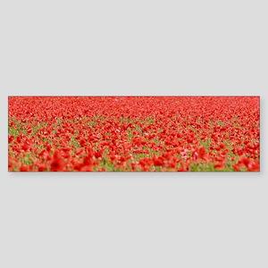Poppy Field - Pro Photo Bumper Sticker