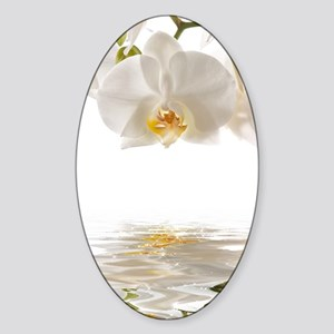 White Orchids Sticker (Oval)