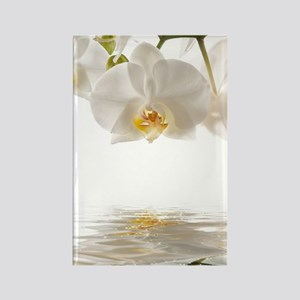 White Orchids Rectangle Magnet