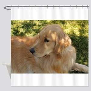 golden retriever grass Shower Curtain