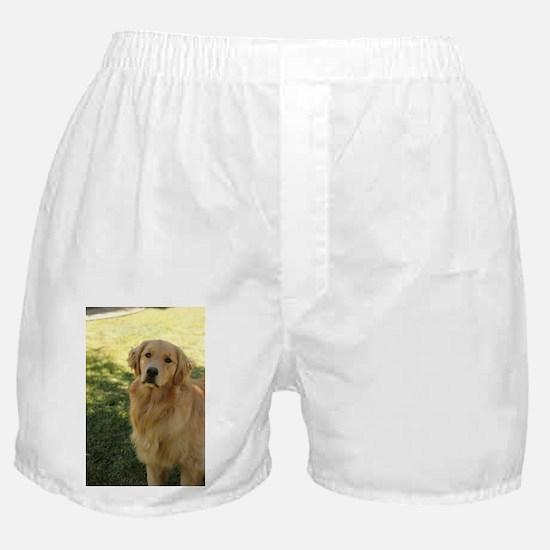 golden retriever n Boxer Shorts