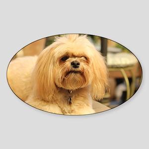 Koko blond lhasa small Sticker