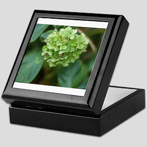 green hydrangea in garde Keepsake Box