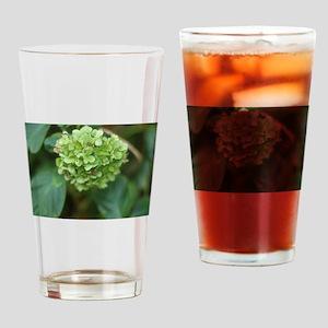 green hydrangea in garde Drinking Glass