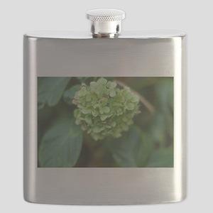 green hydrangea in garde Flask