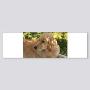 golden retriever grass Bumper Sticker