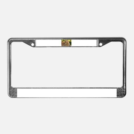 golden retriever grass License Plate Frame