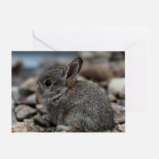 SMALL BABY BUNNY Greeting Card