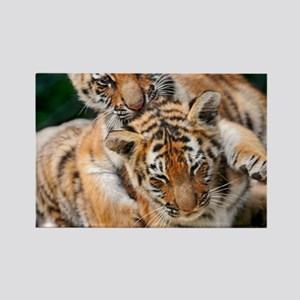 BABY TIGERS Rectangle Magnet