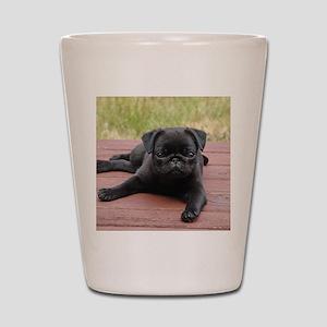 ALERT PUG PUPPY Shot Glass
