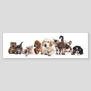 Cute Pet Panorama Sticker (Bumper)