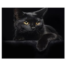 Black Cat Wall Art Framed Print