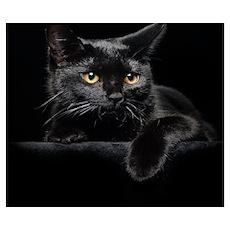 Black Cat Wall Art Poster