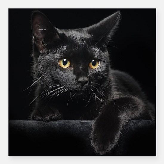 """Black Cat Square Car Magnet 3"""" x 3"""""""
