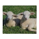 Sheep Fleece Blankets
