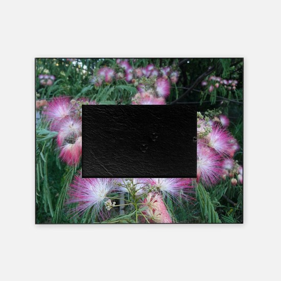 Mimosa Blossoms Picture Frame