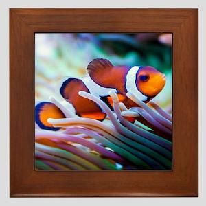 ClownFish20151006 Framed Tile